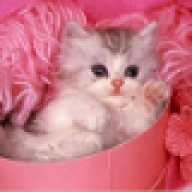 mimi_babycat